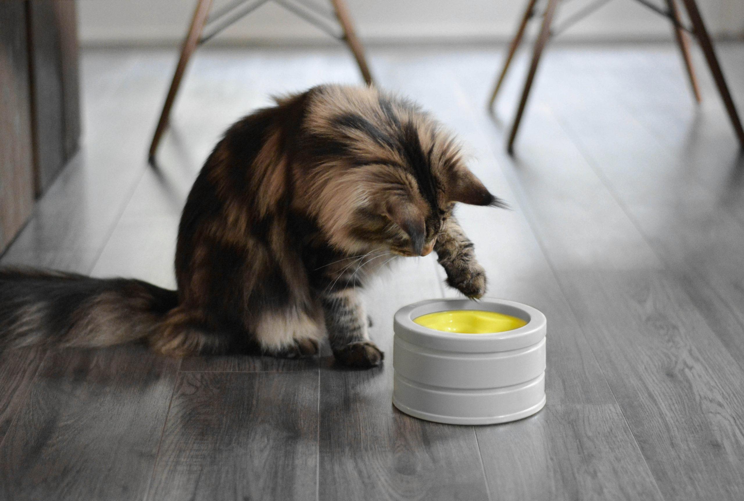 The Intellikatt food bowl
